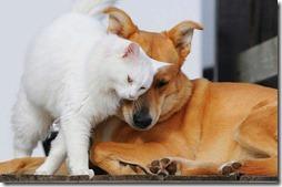 10 -Fotos de gato buscoimagenes (33)