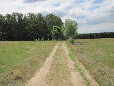 Letzlingen_Feldweg