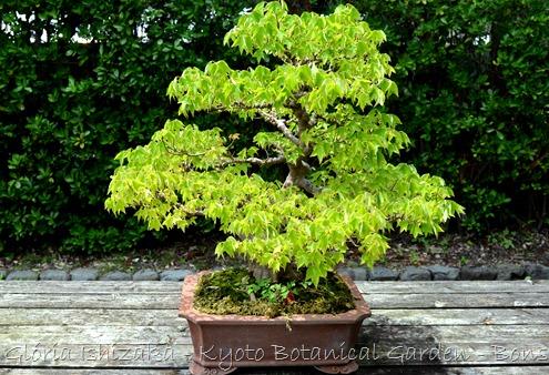 Glória Ishizaka -   Kyoto Botanical Garden 2012 - 57