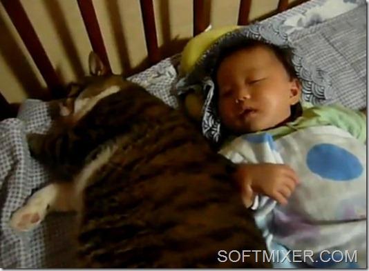 cat_fat