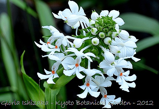 Glória Ishizaka -   Kyoto Botanical Garden 2012 - 15 a
