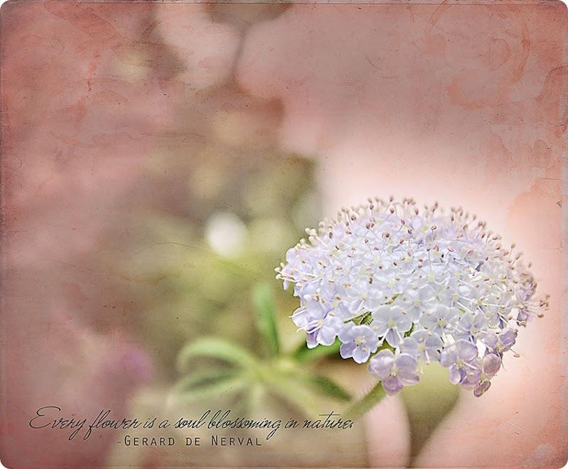 White-flower-cluster1