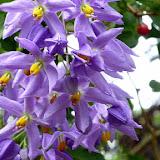 Tropical Flowers on the Walk to the Waterfalls - Port Vila, Vanuatu