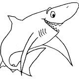 tiburon_8.jpg