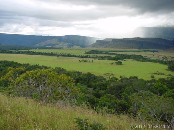 Penyebaran Flora Daerah Sabana