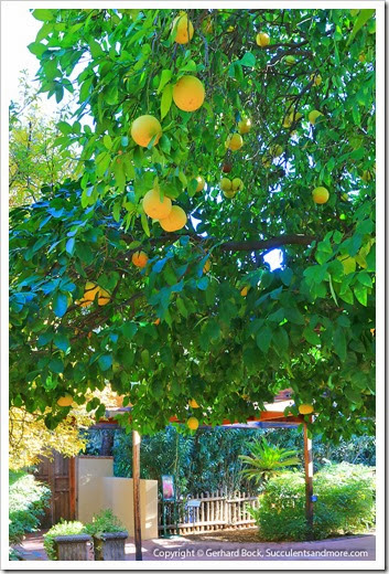 131203_TucsonBotanicalGarden_004