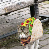 tacocat_2.jpg