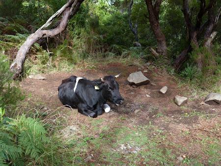 Cu carnea de vaca, nu ti se face foame