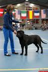 20130511-BMCN-Bullmastiff-Championship-Clubmatch-2155.jpg