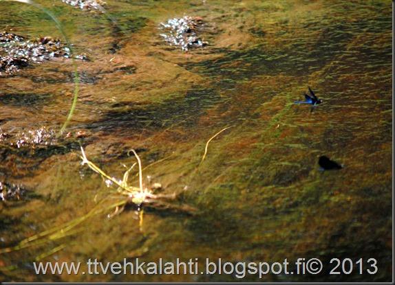 katuvalon vaihto sudenkorento super-komura 115