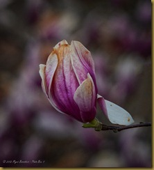 - _DSC6394 March 29, 2012 NIKON D7000