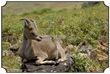 MNR_317_DSC0109_www.keralapix.com