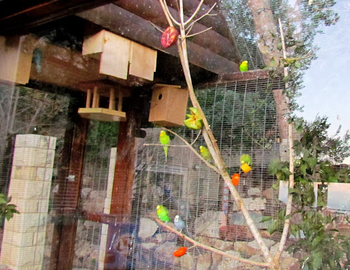 zelenie kolibri.jpg