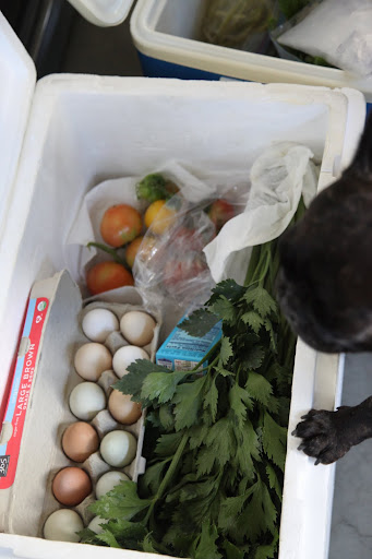 Look, Sharkey!  There are even lots of fresh eggs, which I collected from the chicken coop.  I have a feeling that this will be one delicious weekend.
