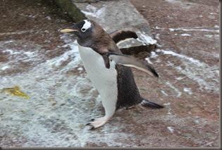 16_12_2014-10_21_04-6041Edinburgh Zoo