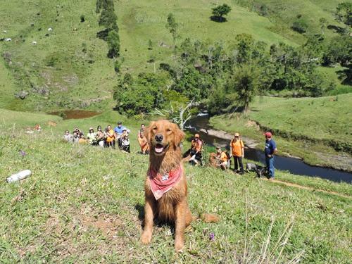 Dogs Trekking 6 (263)