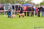 20100513-Bullmastiff-Clubmatch_30893.jpg