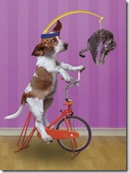 dog_riding_bicycle_very_funny_share_on_facebook
