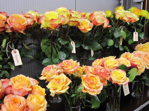 I love seeing gorgeous roses that are multi-colored.