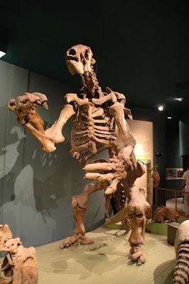 氷河期のクマ(?)の骨格