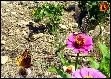 03b - Butterflies