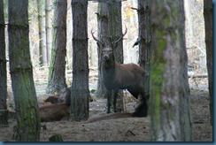 2011-11-28 Wildwood 088