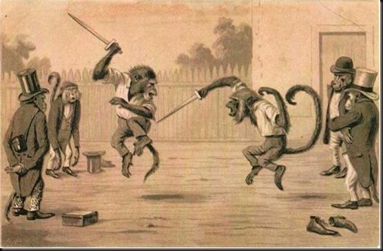 20110531075428-simios-peleando
