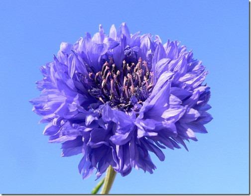 Bunga tumbuhan Angiospermae