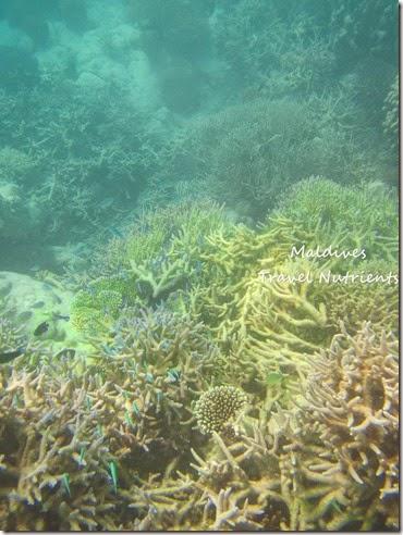 馬爾地夫 沙洲 浮潛 (11)