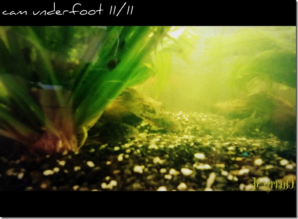 camunderfoot1111