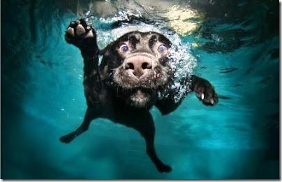perros bajo el agua (4)