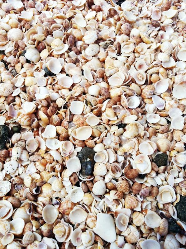 stbarth-shellbeach