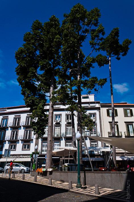 18. Фотопрогулка по улицам города. Улочки. Фуншал. Мадейра. Португалия. Круиз на Costa Concordia.