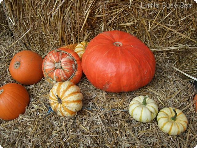 2012_0929photosblog0041