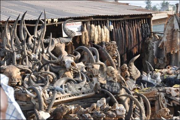 World's Largest Voodoo Market - Togo Akodessewa 02