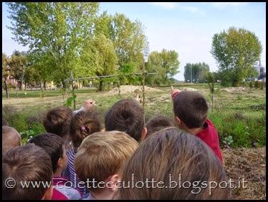 Classi 2°A e 2°B Scuola primaria Padulle all'OrtoQua - ottobre 2013 (5)