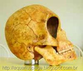 crânio de E.T de Sealand