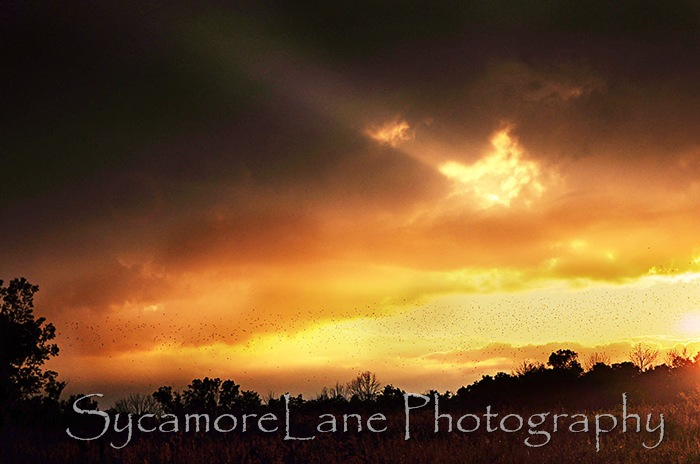 blackbirds and sunset-3