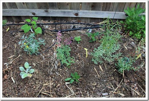 130511_plantingbed
