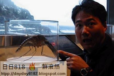 世界最大的蚊子