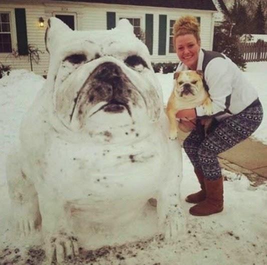 snow_pug