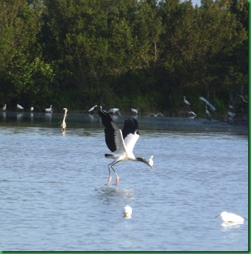 Eco Pond 065A