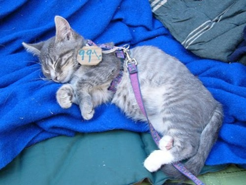 cute-pets-at-occupy-wall-street-10