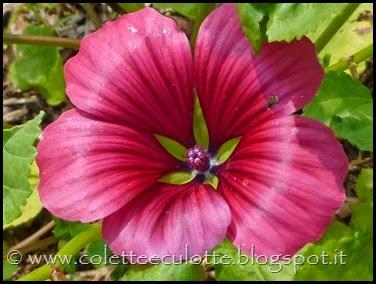 OrtoLà - La fioritura (14)