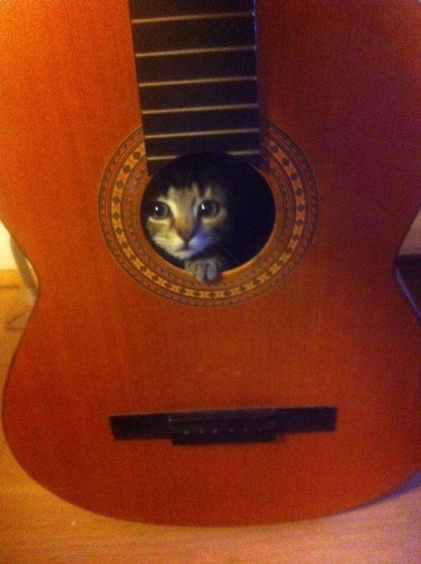 Os gatos não são muito bons em esconde-esconde 5