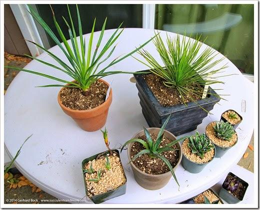 140715_Fling_plants_003