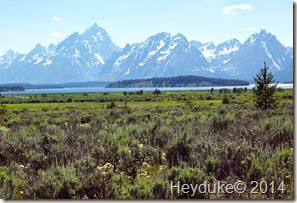 Yellowstone NP and Teton NP 079