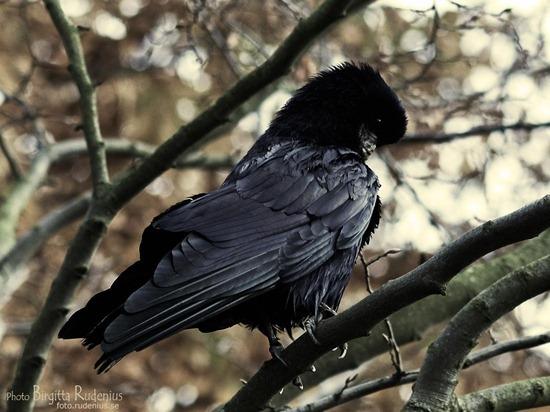 bird_20111109_raka
