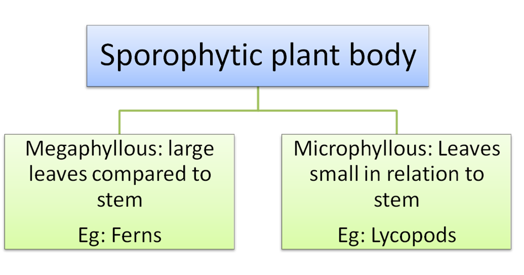 defonition of chemosynthesis