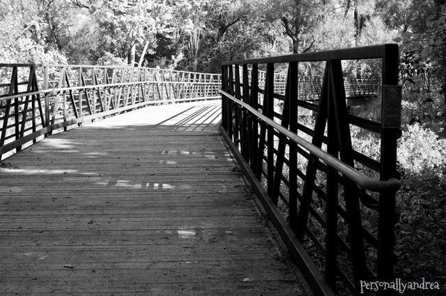 meadowvale black and white_002